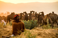 Camel Herder at Dawn